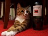 クロネコワインとネオ
